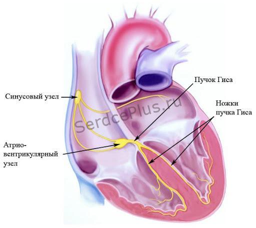 Сердечная электросеть
